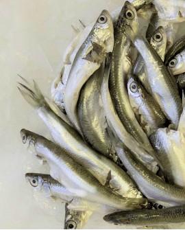 Latterino congelato, cartone 4 Kg - atherina spp Albania - Fish and Frog