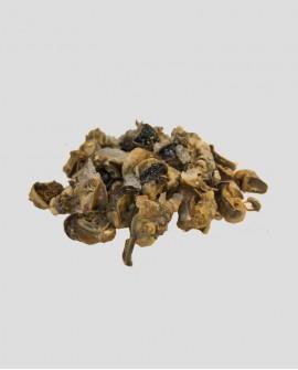 Lumache polpa congelato, cartone 4 Kg con 36-48 pezzi - helix lucorum Turchia - Fish and Frog