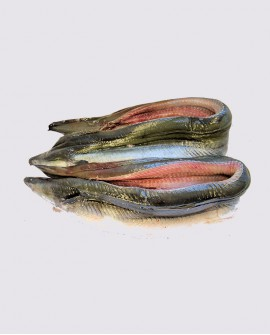 Anguilla Filetto con pelle congelato - cartone 5 Kg con pezzi da 100-300g - allevamento Italia - Fish and Frog