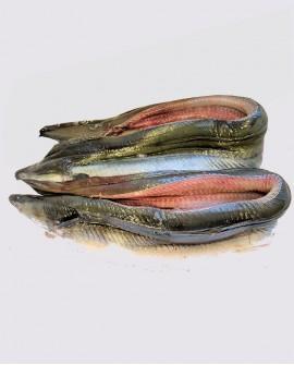 Anguilla Filetto con pelle congelato - cartone 5 Kg con pezzi da 300-400g - allevamento Italia - Fish and Frog