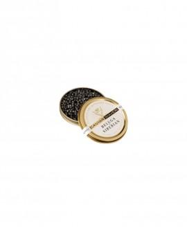 Caviale Beluga Siberian - 10g - cartone nr.6 pezzi - Caviar Giaveri