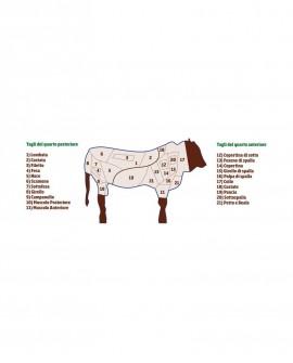 Coscio Quarto Posteriore di Chianina IGP senza Lombata 40 kg - Carni Pregiate Certificate - Tenuta Luchetti