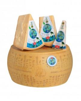 Forma intera ESSENZA ITALIANA formaggio duro italiano con caglio vegetale - 14 mesi - 38 kg - Montanari & Gruzza