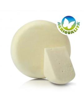 Cacio Amiatino stagionato 15 giorni latte bovino Agriqualità - 1600 gr - Agrifood Toscana