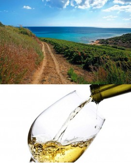 Degustazione di Vini Siciliani e sfiziosità a Cerda, terra del carciofo, sul percorso della Targa Florio