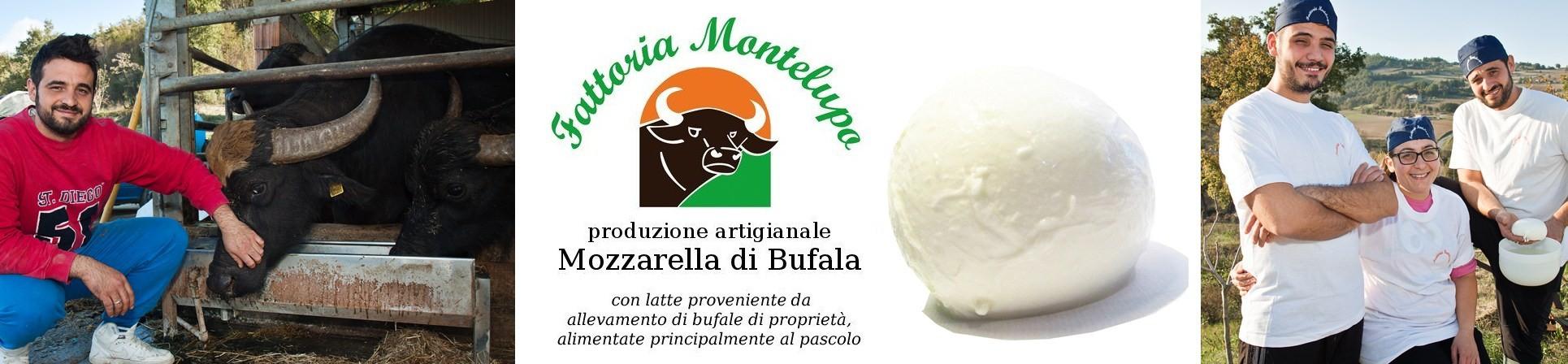 B2B GUSTOX - il Marketplace all'ingrosso delle eccellenze agroalimentari italiane - FATTORIA MONTELUPO