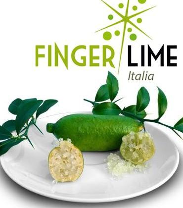 Finger Lime Italia - vendita ingrosso - Lazio